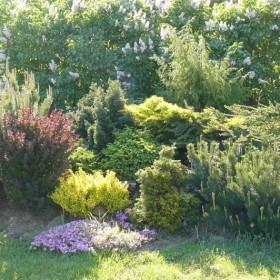 wiosna w ogrodzie :)