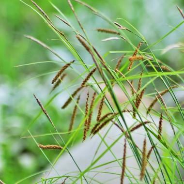 kocham też trawy ozdobne :) jedną z rabat zaplanowałam z różnych rodzajów traw właśnie :)