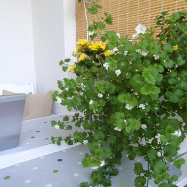 ...dla mnie mój dom był zawsze oazą uwielbiam w nim przebywać...w nim znajduję zarówno relaks jak i rozrywkę...spędzam czas wolny wśród kwiatów, w towarzystwie dwóch...oj przepraszam trzech Kocurów&#x3B;) z ciachem pełnym letnich owoców i kubkiem aromatycznej kawy:)...cóż więcej trzeba....no może kawałek własnego ogródka z małą chatką w pozamiejskiej głuszy:)