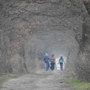Stawy Wielikąt to zespół przyrodniczo - krajobrazowy w pobliżu Raciborza i Wodzisławia Śląskiego.