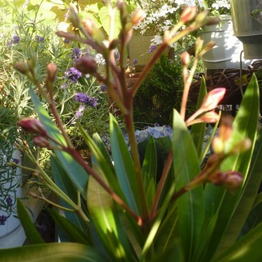 .............i kwiatki na balkonie................