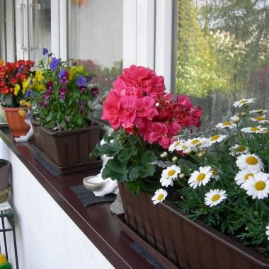 mój balkon wiosną
