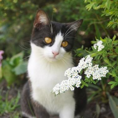 Wiosna i koty