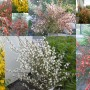 Rośliny, Drugi rok w ogrodzie
