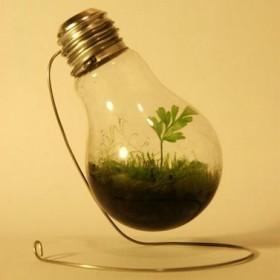 Rośliny kontra nowoczesność