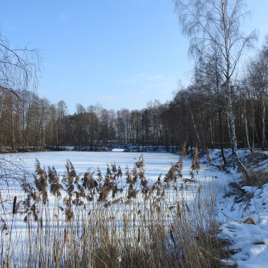 """Leśne klimaty fascynują mnie o każdej porze roku.Ogromną przyjemność sprawia mi fotografowanie ptaków.Zapraszam na spacer do zimowego lasu.P.S. Podziękowania dla redakcji Deccorii za nagrodę książkową wygraną w konkursie""""Boże Narodzenie w moim domu""""Dziękuję również wszystkim odwiedzającym moje aranżacje:)"""