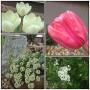 Pozostałe, Debiut - wiosna 2013! - wiosna w ogrodzie