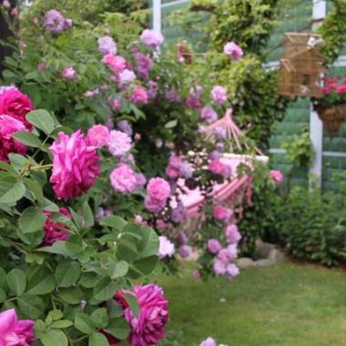 Różany zakątek...