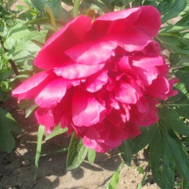kwiatki majowe