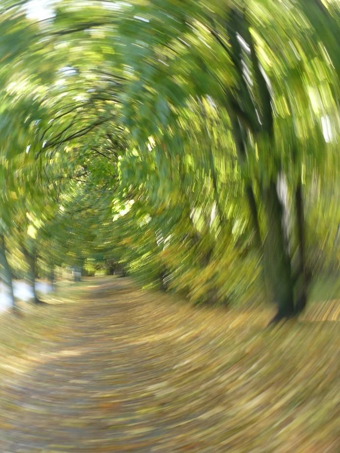 Pozostałe, Listopadowe małe radości................ - ................zakręcona jesień...............