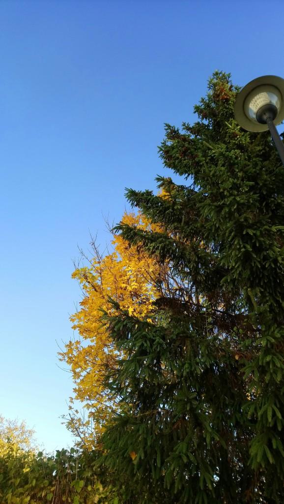 Ogród, Już listopad ............. - ..............i złoto ...........i zieleń.............