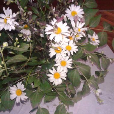 moja mała wiosna