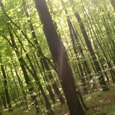 Spacerkiem po lesie :)
