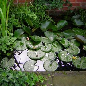 Oczka wodne w naszym ogrodzie :)
