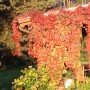 Leśne klimaty, Kolory jesieni - Z roku na rok ...