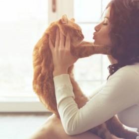Jak stworzyć dom przyjazny kotu?