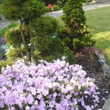 moje hobbi czyli moj ogrod