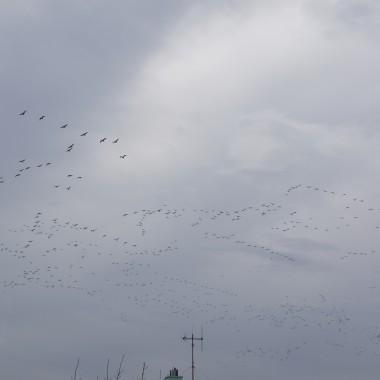 wkradły się zdjęcia  balkonu i z wiosny,kiedy dzikie kaczki szalały nad Szczecinkiem