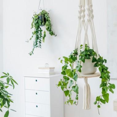 Najlepsze rośliny do sypialni