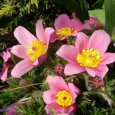 Kwitnący kwiecień w Kłodzku