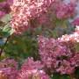 Balkon, Ostatnie ciepłe dni jesieni - przebarwiają się hortensje