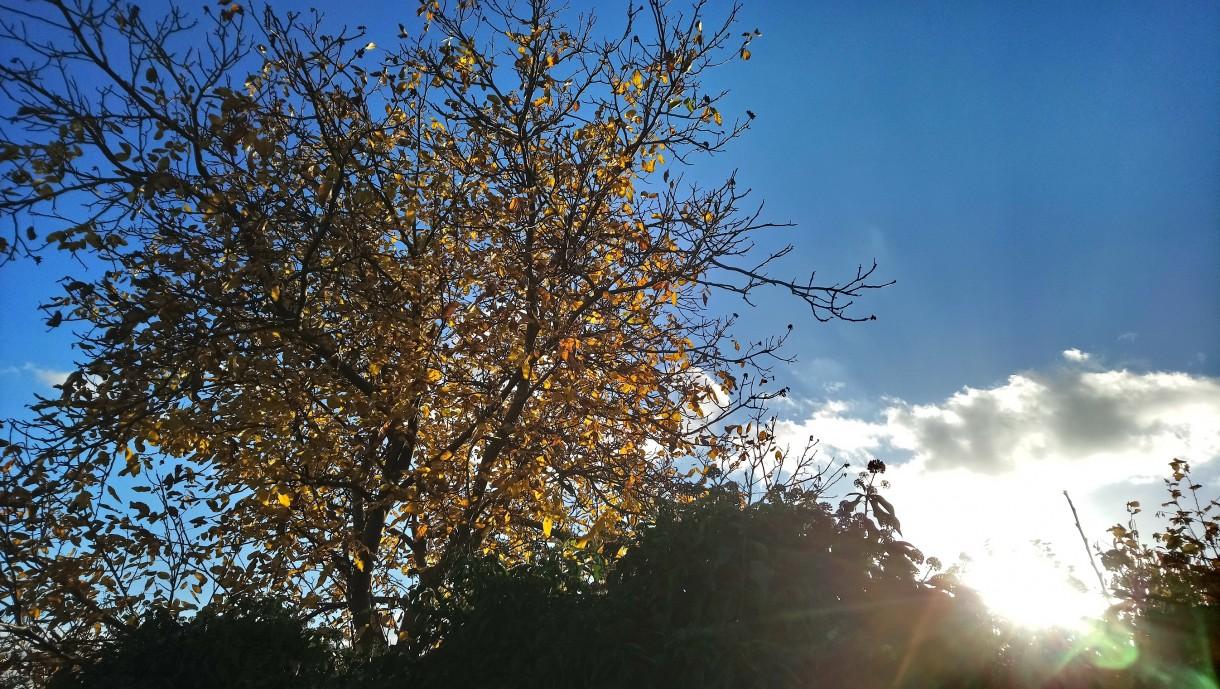 Ogród, Już listopad ............. - .............i orzech i bluszcz...............