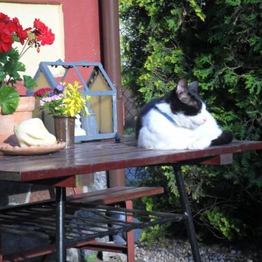 ulubione miejsce kota Felusia:)