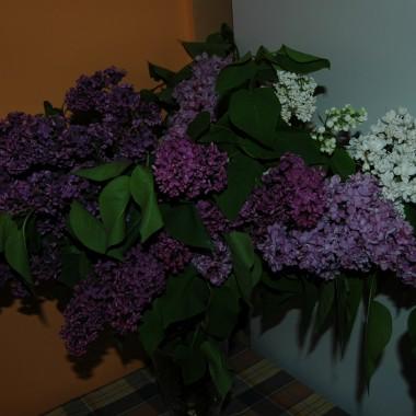 Kwiatuszki :-)
