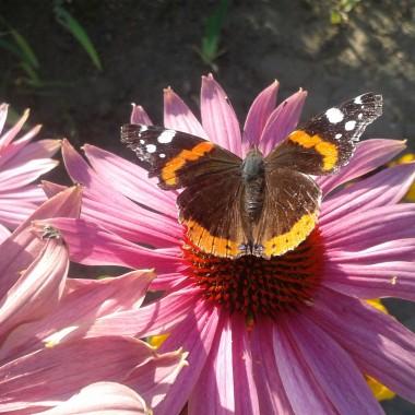 Motylem jestem &#x3B;)