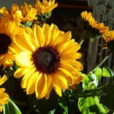 .................i słoneczka w domu.............