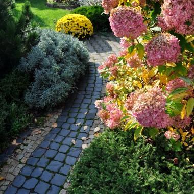 Jesień w ogrodzie i efekty jesiennych nasadzeń:)