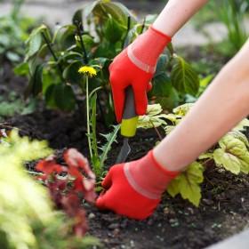 Preparaty na chwasty w ogrodzie – naturalne i skuteczne