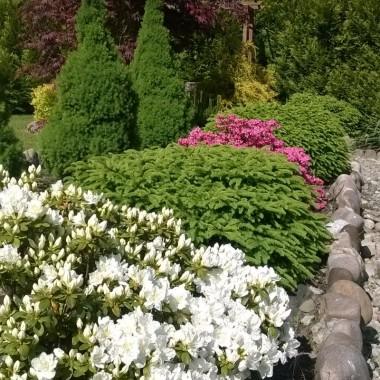 Zapraszam do mojego majowego ogrodu ... chwile dzisiaj złapane ... tak szybko wszystko się zmienia ...