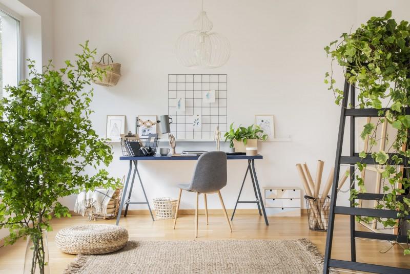 Rosliny do biura, gabinetu i na biurko
