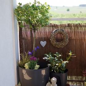 Balkon w majowej odsłonie