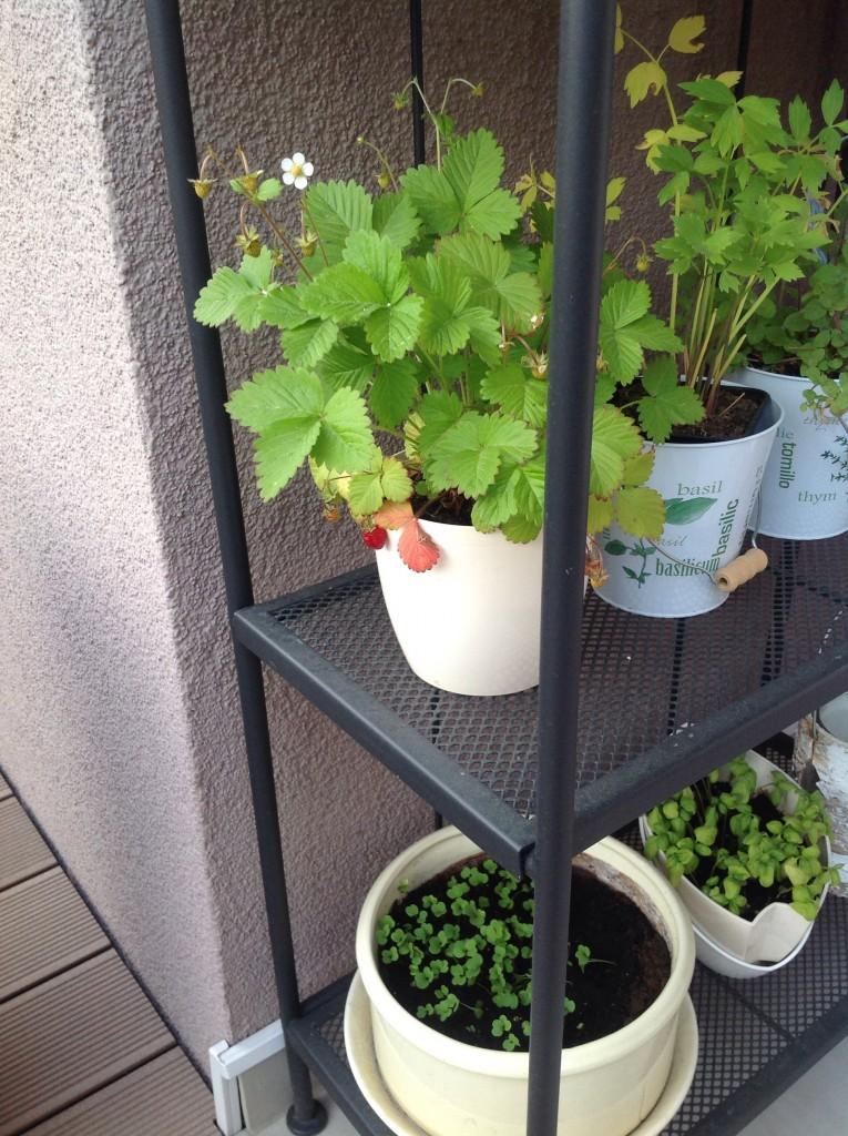 Rośliny, Taras