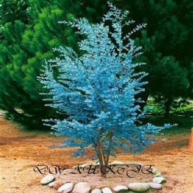 KWIATY- doniczkowe,  drzewka bonsai i inne .....