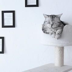 Kocie wnętrze