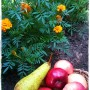 Pozostałe, Jesień w moim ogrodzie / tarasie.
