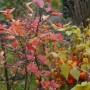 Balkon, Listopadowe zmiany - W sobotę na działce było jeszcze pięknie, jesiennie