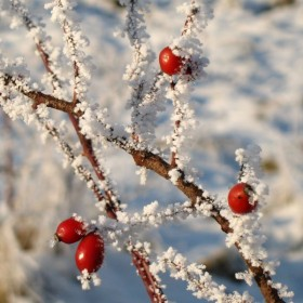 zima 2008 z bliska