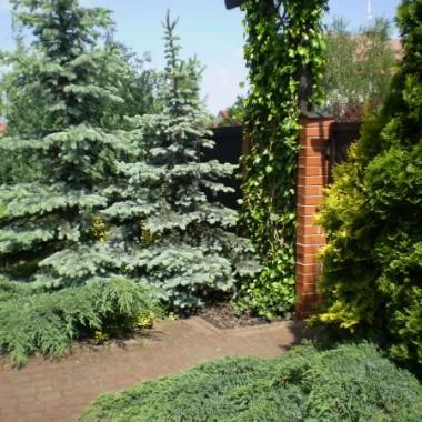 Majowy ogródek