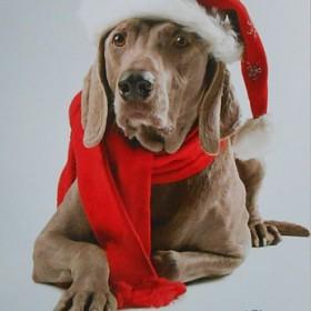 Zwierzęta na kartkach świątecznych