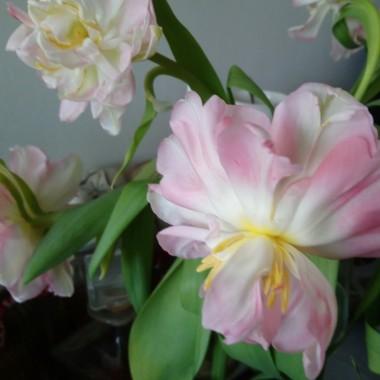 Czyli wiosennie  w domu i w ogrodzie .....................pozdrawiam Was bardzo serdecznie i duuuuuuuuuuuuużo słonka życzę..........:)