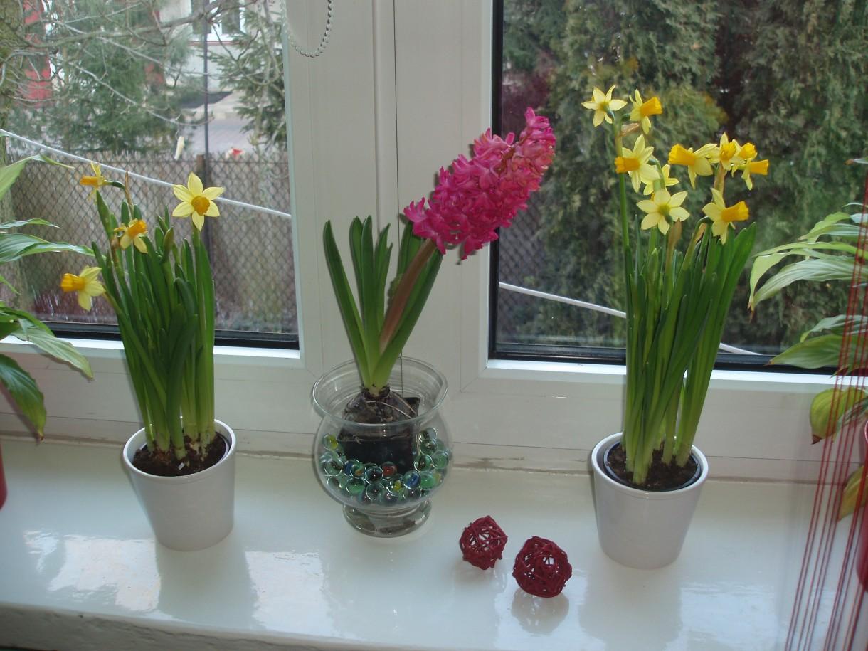Rośliny, wiosna, kwiaty - moje ulubione...