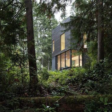 37 metrów z widokiem na las