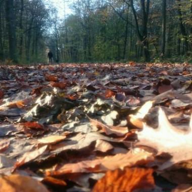 Ubolewam, że do najbliższego lasu mam 9 km :,(Tym razem SPAcerkowo :))) szuranie po liści dywanie :)))