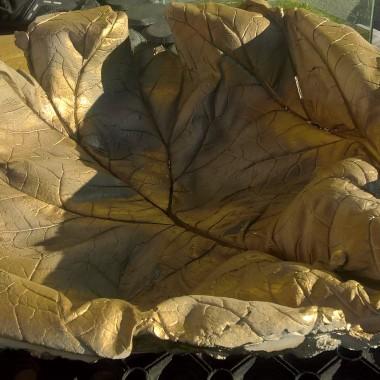 Muszla gipsowa... Odcisk liścia rabarbaru...