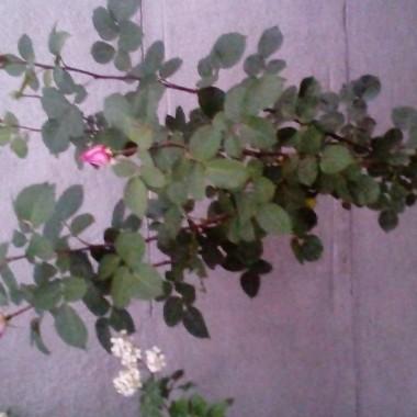 Kwiaty , dom