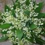 Rośliny, Dzień Matki:)
